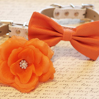 Orange Wedding Dog Collars -Two Spring Wedding Dog Collars, Orange dog bowtie and Floral Dog Collar
