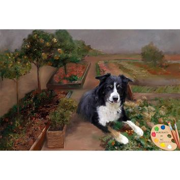 Border Collie Dog Portrait 228