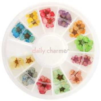 Pressed Dry Natural Petal Flower Wheel / 12 Colors – Daily Charme