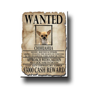 Wanted chihuahua magnet