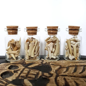 Real fossilized shark teeth animal bones mini glass vials with cork stopper wiccan decoration specimens Taxidermy Oddities