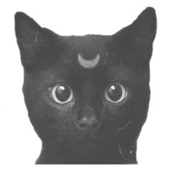Moon Cat Decal