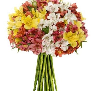 Benchmark Bouquets Assorted Peruvian Lilies, No Vase