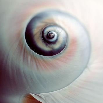 Shell Photograph, Swirl, 5x5  Print, Macro Seashell Photo, Blue Beach Photo