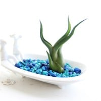 Stoneware Bathtub Planter Set