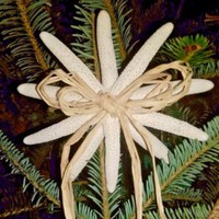 Real Starfish Christmas Tree Topper w/ Rattan Bow Coastal Beach Sea Ornament