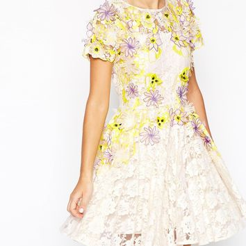 ASOS SALON Applique Petal Lace Skater Dress