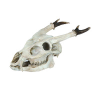 The Great Hunt Resin Deer Skull