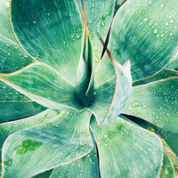 """Green Tropical Succulent Beauty. Extra Large Green Succulent Canvas Art Print, Tropical Canvas Art Print  up to 72"""" by Irena Orlov"""