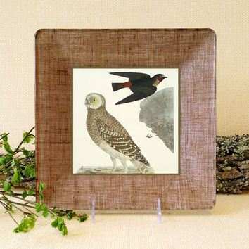 Rustic Owl Wall Art / Decoupage Glass Plate Wall Hanging / rustic home decor woodland art natural colors birds and bees