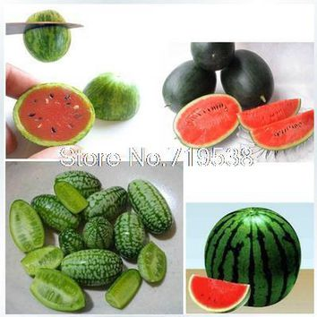 Mini thumbs small balcony pot planting watermelon seeds red-yellow-green mix 10 seeds/Pack
