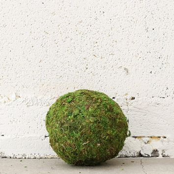 "Natural Green Moss Kissing Ball - 4"" Wide"
