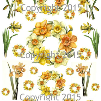 Victorian Daffodil Flowers  Collage Sheet  Printed Collage Sheet,  Weddings, Decoupage, Scrapbook, Altered Art, Victorian Scrap