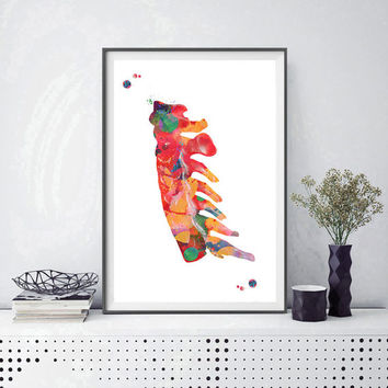 Cervical vertebrae watercolor print anatomy art cervical spine orthopedic art cervical vertebrae anatomy medical art human spine wall decor