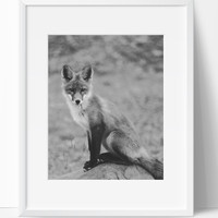 Fox Wall Art Photography, Desert Black and White Modern Art, Prints
