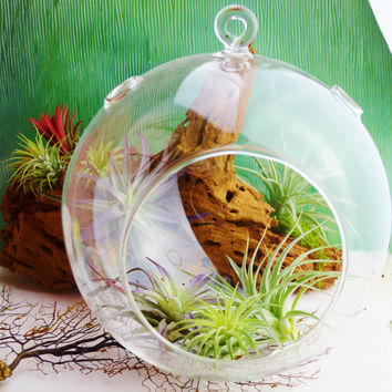 "Extra Large Terrarium ~ 8"" Glass Globe Orb ~DIY ~ Terrarium ~ Needs 1.4 lbs of Sand filler ~ Build your own terrarium ~ 1 pc ~ Orb Only"