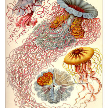 Ernst Haeckel Print - Art Poster - Jellyfish Print - Art Nouveau - Scientific Illustration - Giclee Print - Spring Decor - Mothers Day Gift
