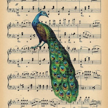 Songbird Peacock Art Print on antique music page, Peacock dictionary art antique book page Peacock art print