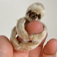 brown finger sloth