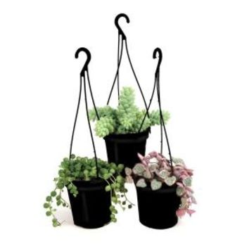 9 cm Hanging Basket Succulent Plant Assorted (3-Pack), 0881006 at The Home Depot - Mobile