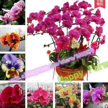 2017 Hot Sale New Very Easy 100 Pcs/bag 24 Kinds To Choose Orchid Seeds ,potted Plants,bonsai Flower Seeds For Diy Happy Garden
