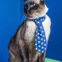 See Spot's Style Pet Tie