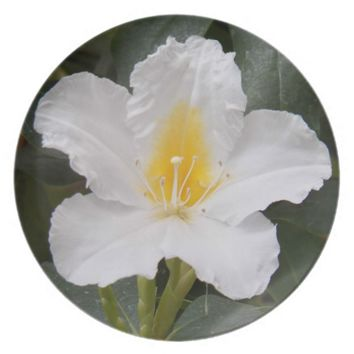 White Flower Photo Dinner Plate