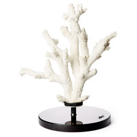 Branch Coral on Marble & Sterling Base, Coral, Barnacles, Shells & Starfish
