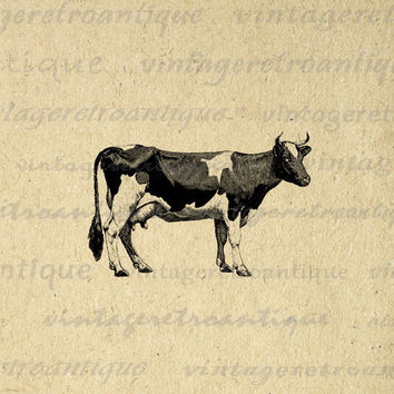 Digital Graphic Cow Printable Farm Animal Download Image Vintage Clip Art for Transfers Making Prints etc HQ 300dpi No.790