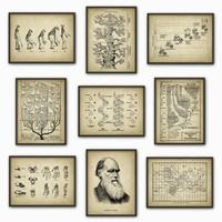 Evolution Wall Art Print Set of 9 - Biology Wall Art - Charles Darwin DNA Tree of Life Apes Skeletons Poster Set - Biology Student Gift Idea
