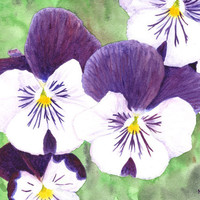 Original watercolor of white, purple and yellow pansies on a green background (unframed) - by Savousepate