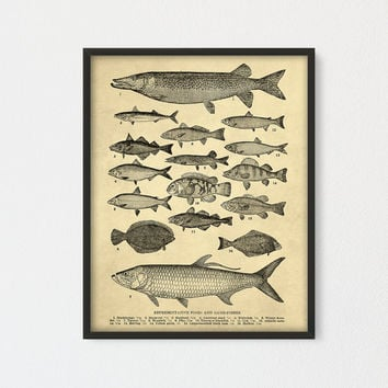 Breeds of fish Printable, Representative Types of Game Fishes, Farmhouse decor, Fish Wall Poster, Cottage, Fisherman Print, Man Cave Decor