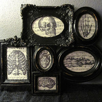 Framed Anatomy Vintage Music Sheet Collage - Horror Gothic Skeleton Home Decor