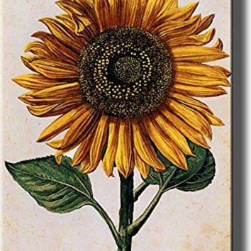 Sunflower Picture on Stretched Canvas, Wall Art Decor Ready to Hang!.