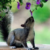 "Fine Art Photography, Animal Photo Art Print, ""Squirrel  """