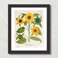 Antique French Style Sunflower No. 6 Canvas Art Print