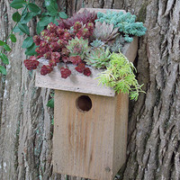 More Birdhouses & Feeders - GREEN ROOF BIRD CHALET