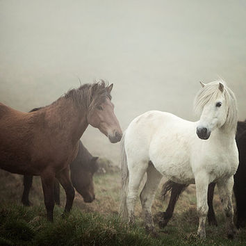 Horses in Fog, Equine Photography, Nature, Autumn, Fall, Horse Art, Chestnut Brown, White, Rustic Wall Art, 8x8  - The Gathering Fog