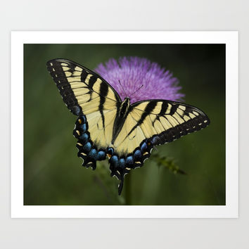 Swallowtail Butterfly Art Print by evermorephotography