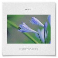 Gorgeous Blue Flowers Beauty Poster
