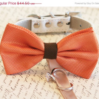 Orange, Brown wedding dog collar, Orange Dog Bow Tie, Dog ring bearer, Pet Wedding accessory, Rustic wedding idea, Dog Lovers,Orange wedding