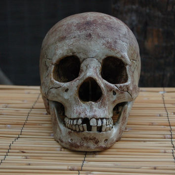Life-Size Aged Headhunter Skull With Lower Jaw
