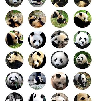 panda bear animal clip art 1.5 INCH circles collage sheet