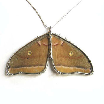 Real Polyphemus Moth Necklace - Bold Statement Jewelry - Woodland Creature - Rustic Jewelry