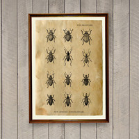 Cabin poster Beetles print Antique art Insect decor AK395