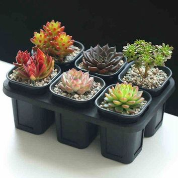 VONL8T Mkono Set of 6 Nursery Pots Seedling Planters Seed Tray for Garden Plants Seeds Succulents Use
