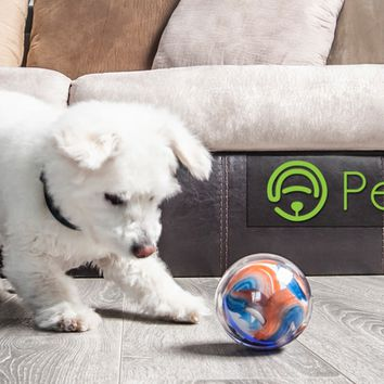 Pebby: The World's Most Advanced Robotic Pet Sitter!