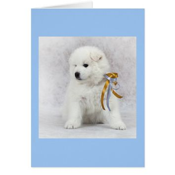 Samoyed Puppy with Ribbons Card - Blank