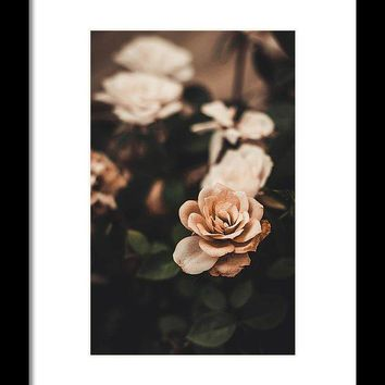 Rose - Framed Print
