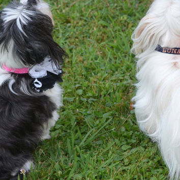 Custom Embroidered Dog Collar with Detachable Flower or Bowtie Sizes XXS-Large